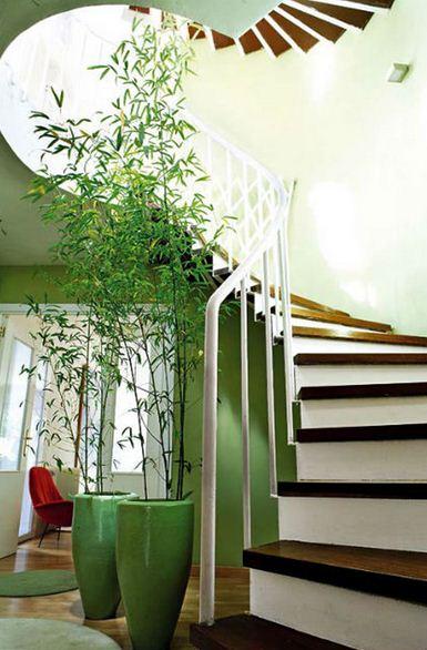 Decorar casas con plantas