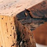 Como combatir los insectos dela madera de nuestra casa
