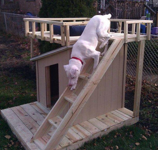 Diseños de casas para perros con escalera