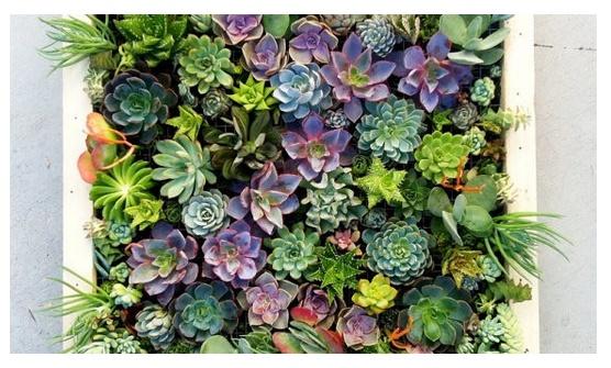 suculenta jardin vertical