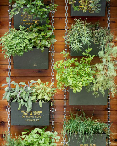 Ideas para jardines verticales caseros for Plantas usadas para jardines verticales